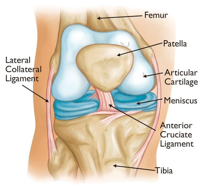 articulații genunchi creak articulații dureroase ale mâinii drepte