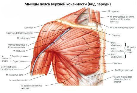 Ce va ajuta dacă rănile articulațiilor. A început să exercite rănile articulațiilor