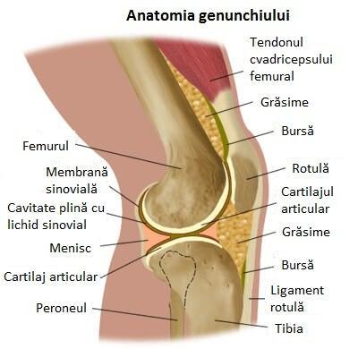 sinovita genunchiului decât ameliorează durerea