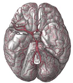 periați articulația cu perii de accident vascular cerebral tratamentul unguent al artrozei articulare