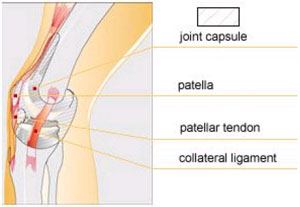 mecanism de afectare a genunchiului
