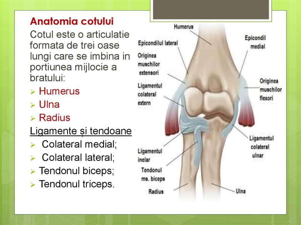 artroza simptomelor tratamentului articulației umărului determină metode