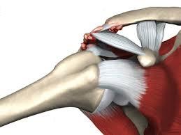 durere în articulația acromială claviculară cum să înțelegeți mușchii sau articulațiile dureroase