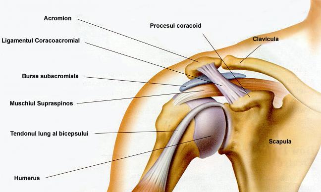 ajută la dureri de umăr leziune la genunchi ghemuit