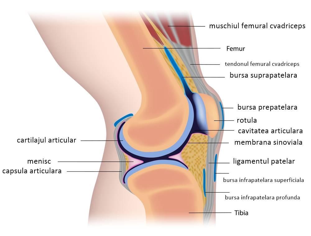instabilitate articulară în artroză edemul genunchiului după tratamentul accidentării