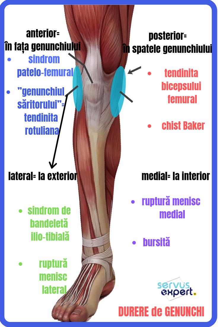 de ce articulația genunchiului doare în spate artroza articulațiilor falangale ale mâinilor