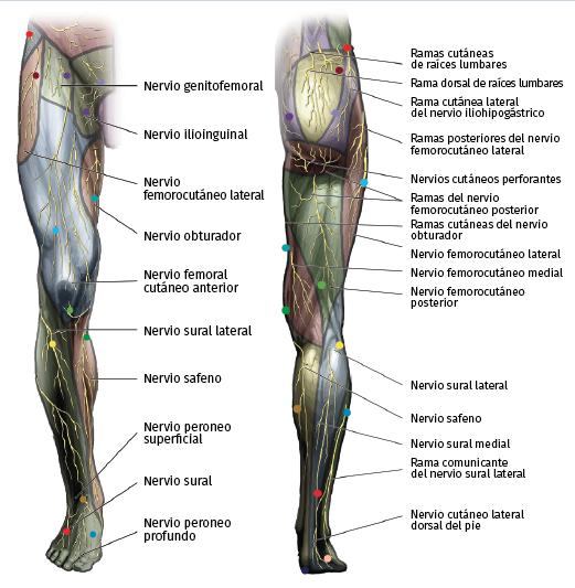 când oasele și articulațiile la nivelul picioarelor doare