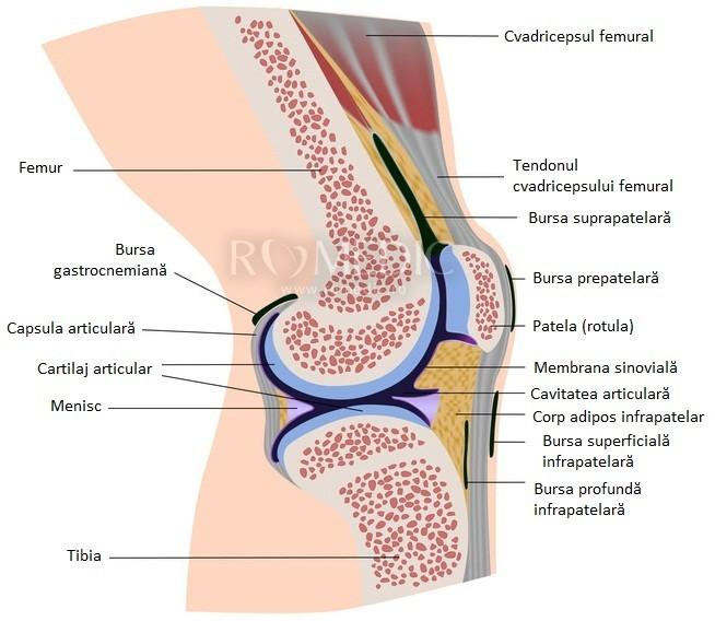 articulația genunchiului cade