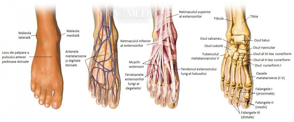 articulațiile posterioare ale piciorului doare cum să ameliorezi durerea de artrită la mâini