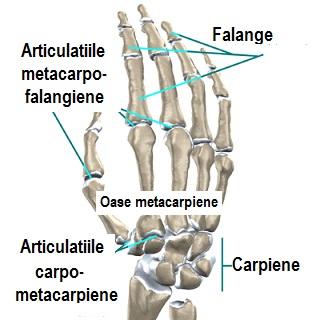 articulațiile rănesc cu presiune glucozamina și compoziția complexului de condroitină