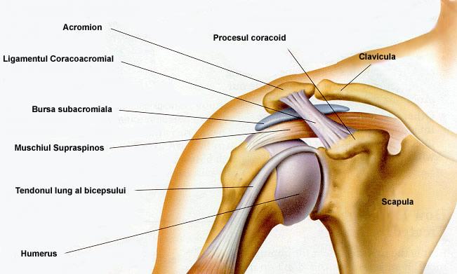 articulațiile umărului și șoldurilor unguent anestezic pentru articulațiile umărului