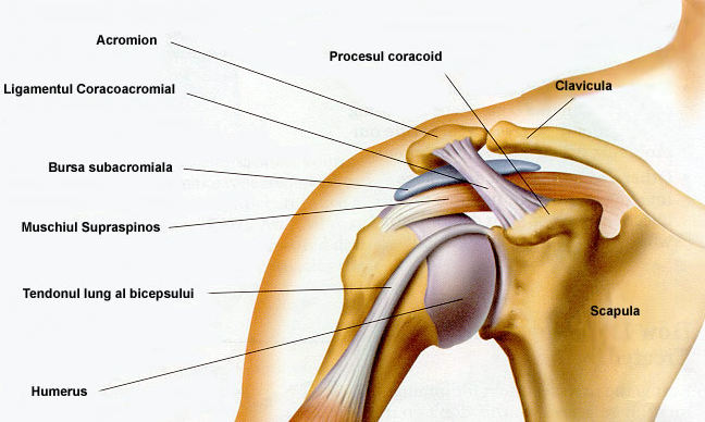 tratamentul articulațiilor grecești osteoporoza medicației articulației genunchiului