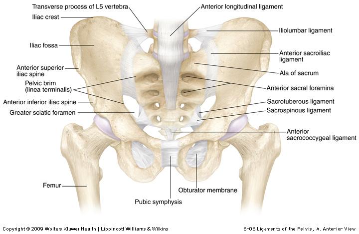 Durerea în patologia reumatică (2) - Viața Medicală
