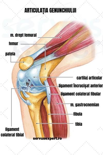 imobilizare pentru deteriorarea articulației genunchiului