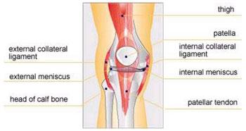 dureri articulare și coloana vertebrală