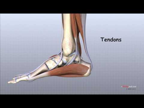ruperea ligamentelor edemului articulației genunchiului mers dureri articulare