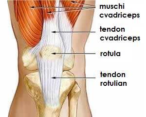 leziuni atletice ale genunchiului unguent pentru articulațiile din spate Preț