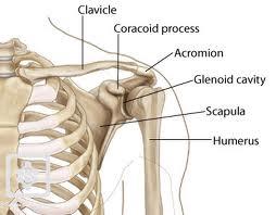 cu durere în articulațiile genunchiului boli articulare majore legate de vârstă